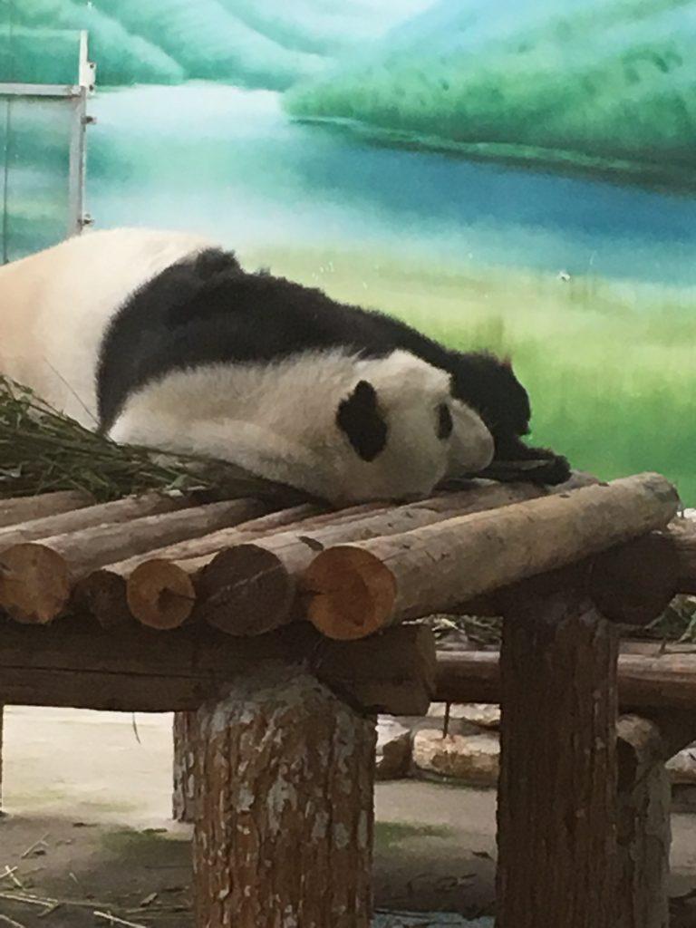 Panda at Taihu Lake National Wetland Park